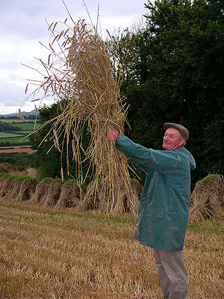 Mr Dick Wood holds the sheaf aloft at St Columb in 2008. photograph: © Gillian Nott
